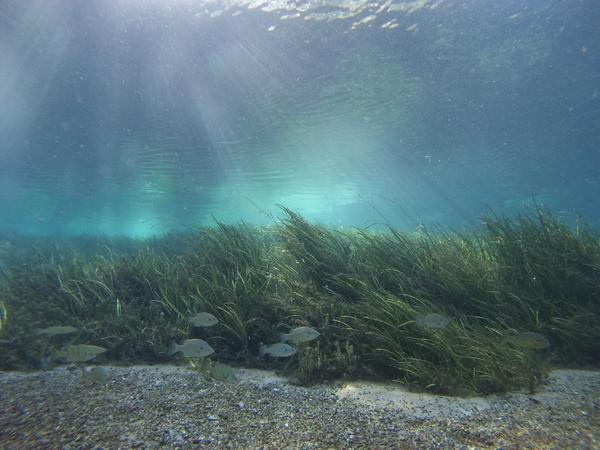 Dayo Scuba Center LLC, Orlando Florida Guided Dives
